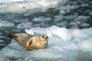 Arctic Ocean Recordings
